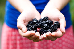 On the palm rests delicious blackberry Royalty Free Stock Photography