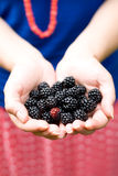 On the palm rests delicious blackberry Royalty Free Stock Photo