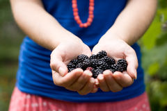 On the palm rests delicious blackberry Stock Image