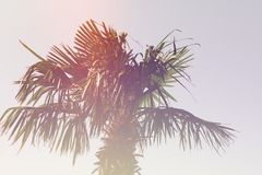 Palm retro style royalty free stock images