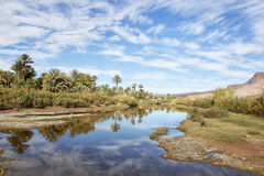 Palm and river with cloudy blue sky. Royalty Free Stock Photo