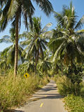 Palm road Royalty Free Stock Image
