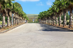 The Palm road. In Israel stock photography