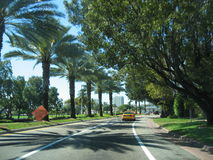 Palm road Stock Photo