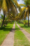 Palm road on the banana plantation, Guadeloupe Stock Image