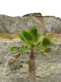 Palm and rock Stock Image