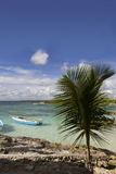 Palm on rocks with boat Stock Image