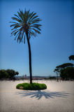 Palm in Rome Royalty Free Stock Photos