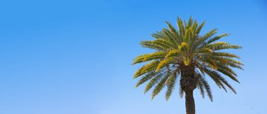 Palm (with room for text) Stock Images