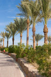 Palm row Royalty Free Stock Images