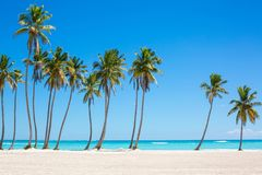 Palm trees at the beach with azure water and clear blue sky on background Stock Photography