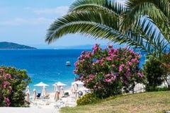 Palm, Roze oleanderbloemen, strand met paraplu's en het blauwe overzees Stock Afbeelding