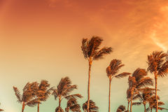 Palm's tops with the sky behind Royalty Free Stock Photography