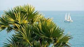 Palm and sailing boat Royalty Free Stock Photo