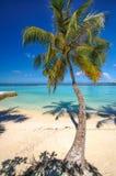 Palm at sand beach on tropical paradise Maldives island. Green palm tree at white sand beach on tropical paradise island Royalty Free Stock Photo