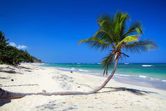 Palm on sand on caribbean beach with blue sky Royalty Free Stock Photos