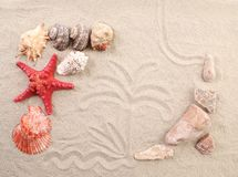 Palm on sand shells and sea start. Stock Photo