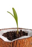 Palm sapling Stock Photo