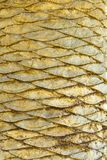 Palm Scales Royalty Free Stock Photography