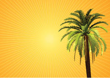 Palm scenic. Palm, sun and sunlight scenic Royalty Free Stock Photo