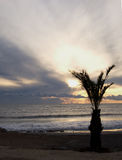 Palm by the sea Royalty Free Stock Photography