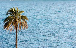 Palm with Sea. Royalty Free Stock Images