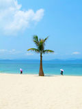 Palm and sea in China Stock Photos