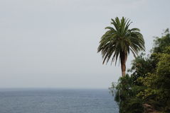 Palm and sea over Santa Cruz de la Palma, La Palma Stock Photo