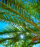 Palm sea shore. Palm tree on the shore of the sea against the blue sky Stock Images