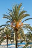 Palm Stock Photos