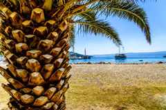 Palm at seaside with visible ship and harbour. Stock Images