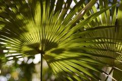 Palm'sens sidor specificerar royaltyfria foton