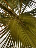 Palm shade. Tropical shade of palm royalty free stock photography