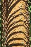 Palm shadow Royalty Free Stock Photo