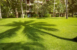 Palm shadow on grass Stock Photography