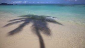 Palm shadow on Lanikai Beach stock video footage