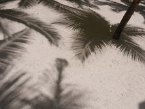 Palm shadow sand Royalty Free Stock Images