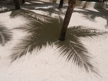 Palm shadow sand Stock Image