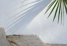 Palm shadow on stucco wall Stock Photos