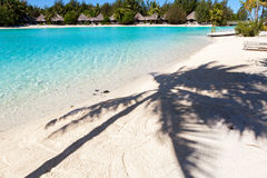 Palm shadow on a tropical beach. French Polynesia Stock Images