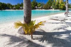 Palm shadow on a tropical beach. French Polynesia Royalty Free Stock Images