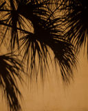 Palm Shadows Royalty Free Stock Photo