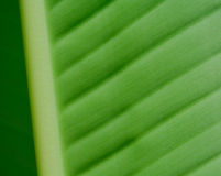Palm sheet. Close-up Royalty Free Stock Photography