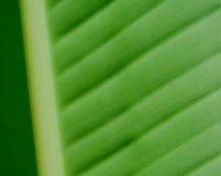 Palm sheet. Close-up Royalty Free Stock Photography