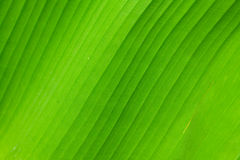 Palm sheet. A structure. Stock Photo