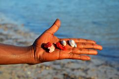 Palm with shells and corals, Zanzibar Royalty Free Stock Photos
