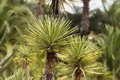 Palm shoots Royalty Free Stock Photo