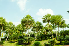 Palm  show in Royal Flora 2011 at chiangmai. Stock Photo