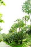 Palm  show in Royal Flora 2011 at chiangmai. Royalty Free Stock Photo