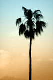 Palm silhouette. Silhouette of a single palm tree, simple picture Royalty Free Stock Photos